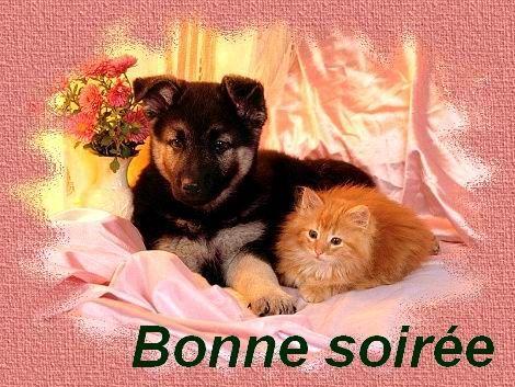 Image result for bonne soiree
