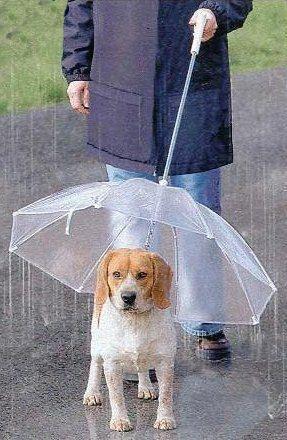pluie